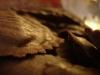 0510_TortelliChocolatRana03