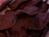 0510_TortelliChocolatRana04
