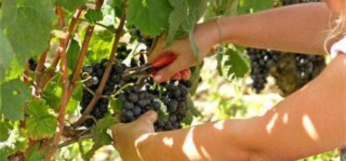 Concours : Vignobles du Berry