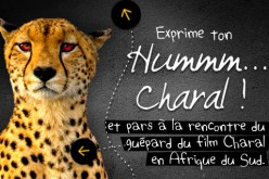Info jeux-concours : « Hummm Charal ! »
