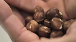 0814_nuts