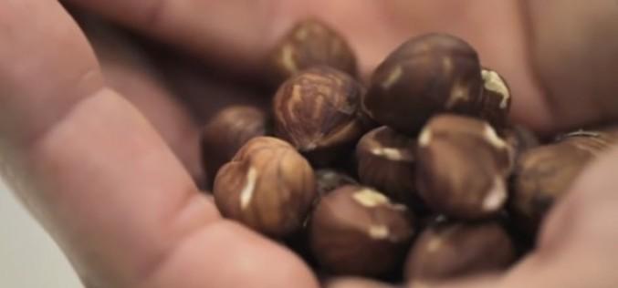 Pénurie de noisettes : les écureuils à la rescousse?