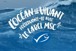 Quelques questions sur le label MSC