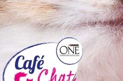 Le Café Chat, le bar qui ronronne